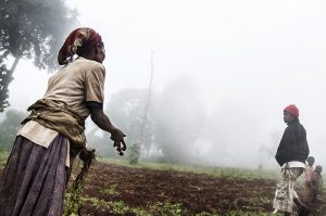 Agricultural transformation in Africa: The myths, key issues